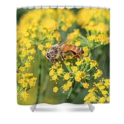 Honeybee On Dill Shower Curtain by Lucinda VanVleck