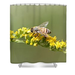 Honeybee On Goldenrod Twig Shower Curtain by Lucinda VanVleck