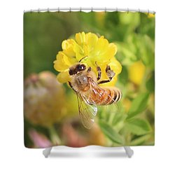 Honeybee On Hop Clover Shower Curtain by Lucinda VanVleck