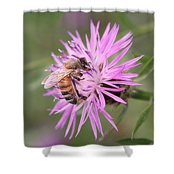 Honeybee On Ironweed Shower Curtain by Lucinda VanVleck
