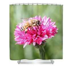 Honeybee On Pink Bachelor's Button Shower Curtain by Lucinda VanVleck