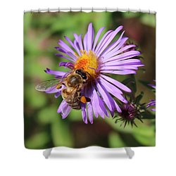 Honeybee On Purple Wild Aster Shower Curtain by Lucinda VanVleck