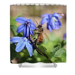 Honeybee On Siberian Squill Shower Curtain by Lucinda VanVleck