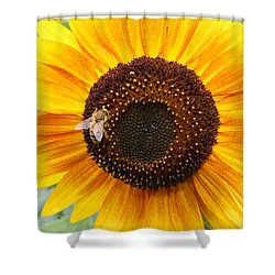 Honeybee On Small Sunflower Shower Curtain by Lucinda VanVleck