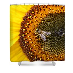 Honeybee On Sunflower Shower Curtain