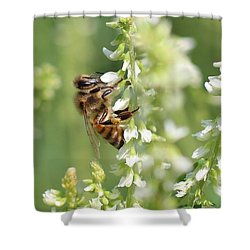 Honeybee On Sweet Clover Shower Curtain by Lucinda VanVleck