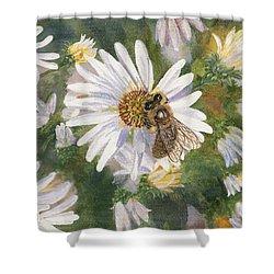 Honeybee On White Aster Shower Curtain by Lucinda V VanVleck