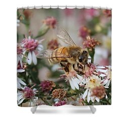 Honeybee Sipping Nectar On Wild Aster Shower Curtain by Lucinda VanVleck