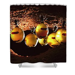 Honeypot Ants Shower Curtain by Reg Morrison