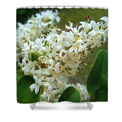 Shower Curtain featuring the photograph Honeysuckle #1 by Robert ONeil