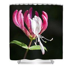 Honeysuckle Shower Curtain by Richard Thomas