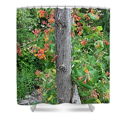 Shower Curtain featuring the photograph Honeysuckle's Friend by Brenda Brown