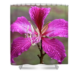 Hong Kong Orchid Tree Flower Shower Curtain by Venetia Featherstone-Witty