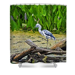 Hooligan Heron Shower Curtain by Al Powell Photography USA