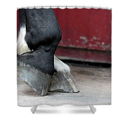 Hooves Shower Curtain