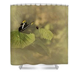 Hop On My Back My Lady And We Will Fly Far Far Away Shower Curtain