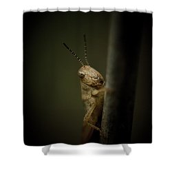 hop Shower Curtain by Shane Holsclaw