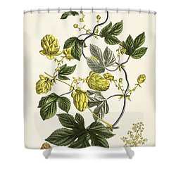 Hop Vine From The Young Landsman Shower Curtain by Matthias Trentsensky