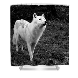 Shower Curtain featuring the photograph Hopeful by Vicki Spindler