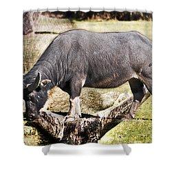 Horn Of A Buffallo Shower Curtain