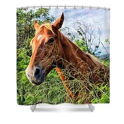 Shower Curtain featuring the photograph Horse 1 by Dawn Eshelman