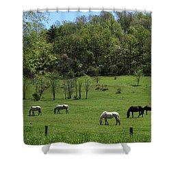 Horse 27 Shower Curtain