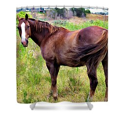 Shower Curtain featuring the photograph Horse 5 by Dawn Eshelman