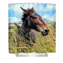 Shower Curtain featuring the photograph Horse 6 by Dawn Eshelman