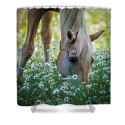 Horse And Daisies Shower Curtain by Paul Freidlund