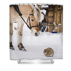 Horse And Rabbit Shower Curtain