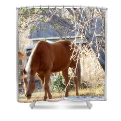 Horse And The Apple Tree Shower Curtain