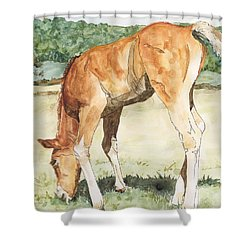 Horse Art Long-legged Colt Painting Equine Watercolor Ink Foal Rural Field Artist K. Joann Russell  Shower Curtain by Elizabeth Sawyer