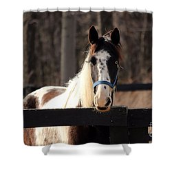 Horse At The Gate Shower Curtain