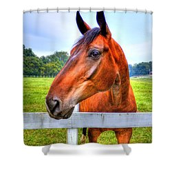 Horse Closeup Shower Curtain by Jonny D