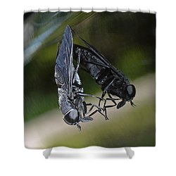Shower Curtain featuring the photograph Horse Fly by DigiArt Diaries by Vicky B Fuller