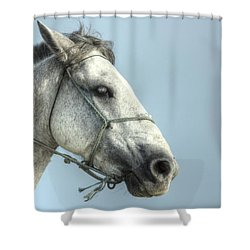 Shower Curtain featuring the photograph Horse Head-shot by Eti Reid