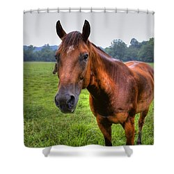 Horse In A Field Shower Curtain by Jonny D