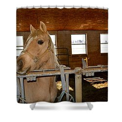 The Amishman's Old Friend Shower Curtain