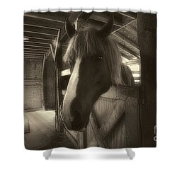 Horse In Barn Stall Shower Curtain by Dan Friend