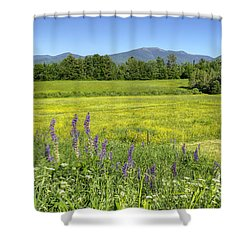 Horse In Buttercup Field Shower Curtain