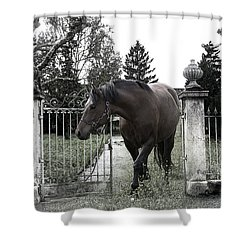Horse In Europe Shower Curtain