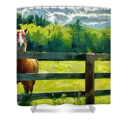 Shower Curtain featuring the painting Horse In The Field by Jeff Kolker
