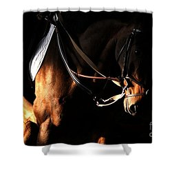 Horse In The Shade Shower Curtain
