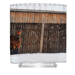 Horse Looking At Snow Storm Shower Curtain by Dan Friend