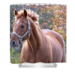 Shower Curtain featuring the photograph Horse Muscle by Glenn Gordon
