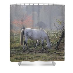 Horse On A Peaceful Day Shower Curtain
