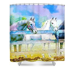 Horse Paintings 008 Shower Curtain by Catf