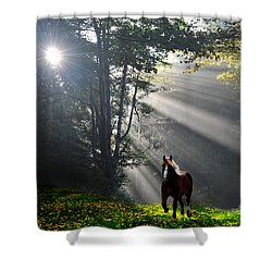 Horse Running In Dandelion Field With Streaming Sunlight Shower Curtain by Dan Friend