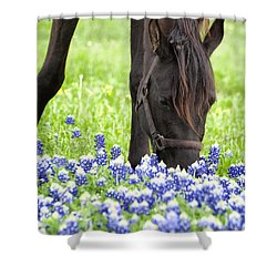 Horse With Bluebonnets Shower Curtain