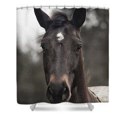 Horse With Gentle Eyes Shower Curtain